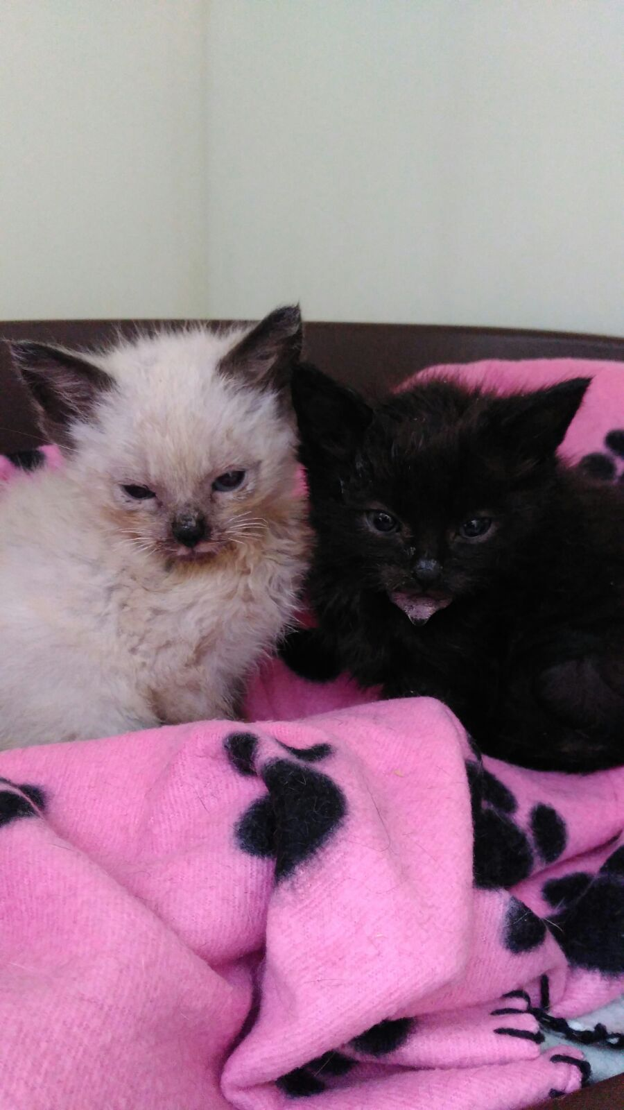 We would like to take this opportunity to update our supporters and followers about the situation regarding our sick kittens.  We have recently taken the decision to quarantine the sanctuary cattery due to a virus that has unfortunately taken the lives of 5 of the kittens we had recently rescued. ...