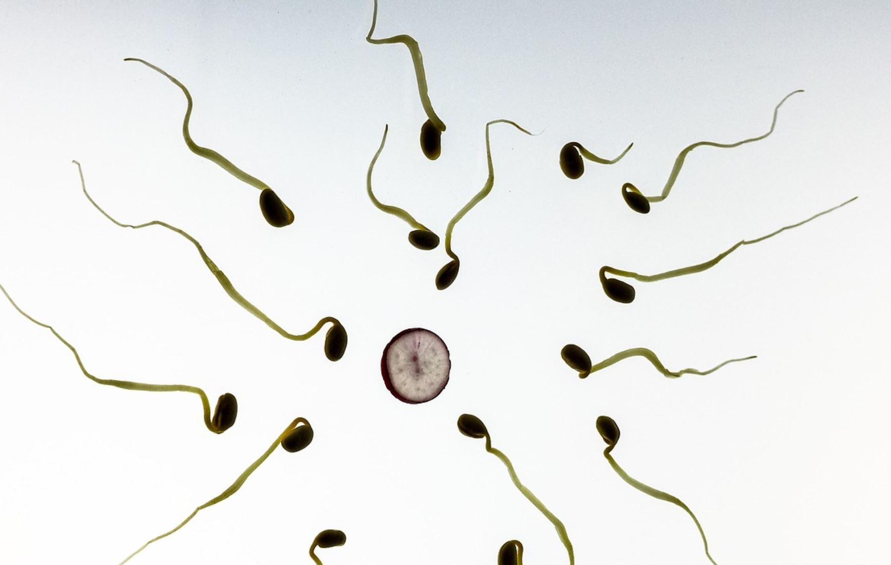 Name:  sperm.JPG Views: 0 Size:  103.0 KB