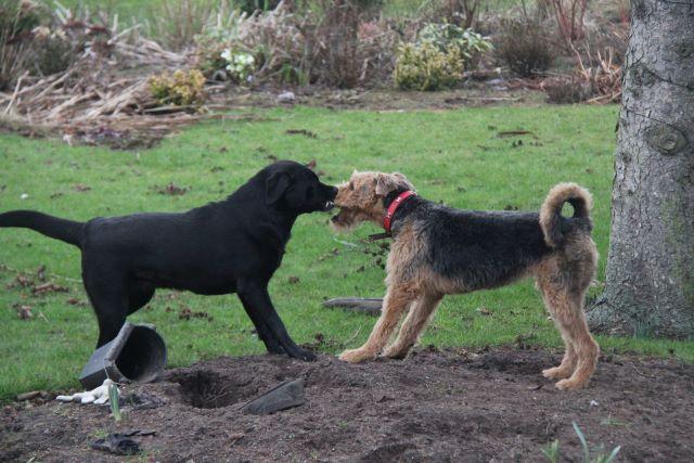 Name:  dogs.JPG Views: 0 Size:  63.0 KB