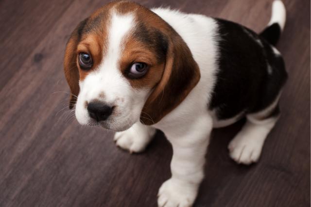 Name:  s960_Beagle.png Views: 0 Size:  771.6 KB