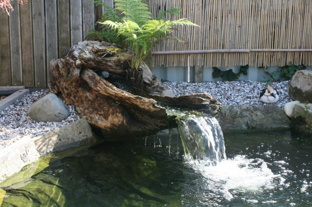 The Japanese Koi Pond Join Q Local Business Select Pages